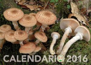 Calendario-2016-1